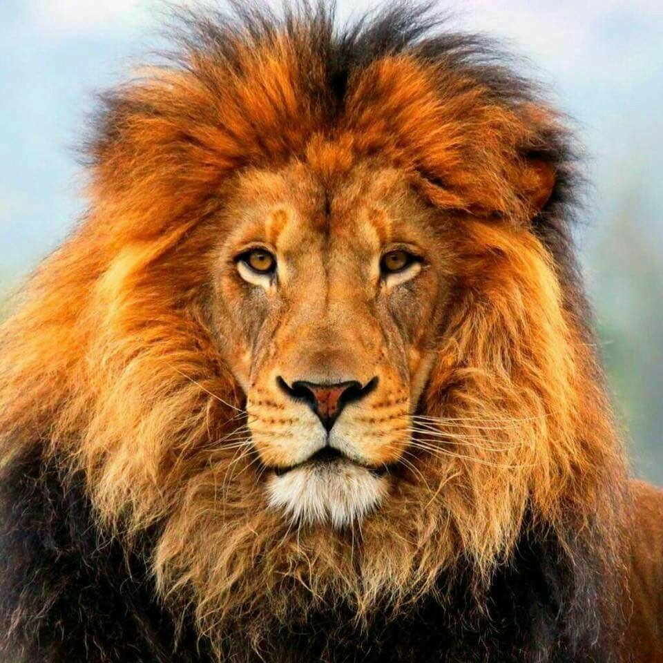 The Tale of the Lion Hunter Who Became the Hunted