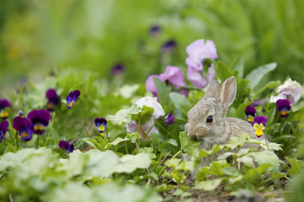 Garden Tales: Poetry and Verse About a Bunny That I Curse